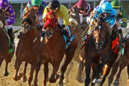 horse thoroughbred racing